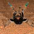 African baboon spider - Stock Photo