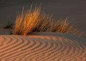 Grass and dune — Stock Photo