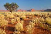 Woestijn landschap — Stockfoto