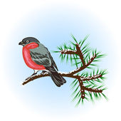 Bullfinch on the pine branch — Stockvector