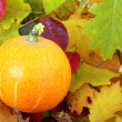 Pumkin and fall leaves - Stock Photo