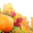 Autumn Pumpkin — Stock Photo #4061478