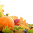 Autumn Frame - Stock Photo