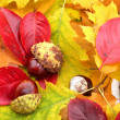 Autumn decoration - Stock Photo