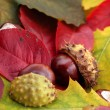 Autumn Symbol - Stock Photo