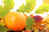 Pumpkin with autumn leaves — Stock Photo