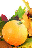 Fall pumpkin and leaves — Stock Photo