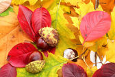 Autumn decoration — Stock fotografie