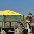 Agriculture worker with fresh vegetables -  