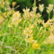 Gras and flowers background at raint — Stock Photo