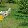 Bee home at meadow — Stock Photo