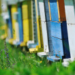 Bee home at meadow - Stock Photo
