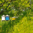 Stock Photo: Bee home at meadow