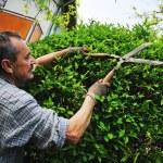 Man garden work — Stock Photo