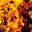 Wild fire — Stock Photo
