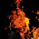 Wild fire — Stock Photo #5379734