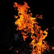 Wild fire - Stock Photo