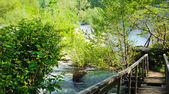 Fresh clean nature with wooden bridge — Stock Photo