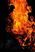 Wild fire — Stock Photo
