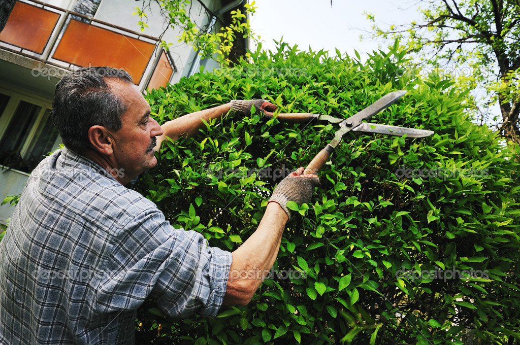 Man Garden Work Stock Photo Shock 5378284