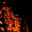 Wild fire - 