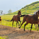 Baby horse — Stock Photo