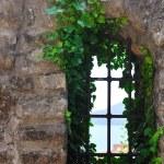 Window old plant — Stock Photo