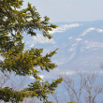 Winter tree — Stock Photo #5383863