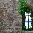 Window old plant — Foto de Stock