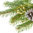 Decorated fir tree with cone — Stock Photo