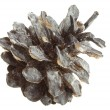 Pine cone in snow — Stock Photo
