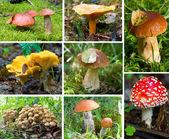 Forest mushrooms set — Stock Photo
