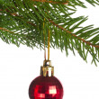 Red ball on fir tree branch — Stock Photo