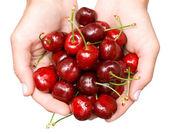 Sweet cherries in hands — Stock Photo
