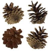 Pine cones set — Stock Photo