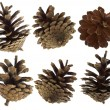 Stock Photo: Pine cones set