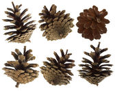 Pine cones set — Stock Photo
