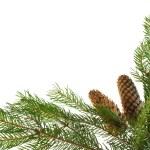 ramos de abeto e cones como frame — Foto Stock