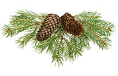 Fir tree branches with cones — Foto de Stock