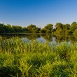 Rushy pond — Stock Photo
