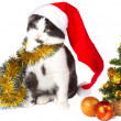 Kitten as Santa Claus and christmas tree — Stockfoto
