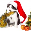 Kitten as Santa Claus and christmas tree — ストック写真