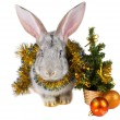 Gray rabbit and christmas decorations — Stockfoto