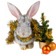 Gray rabbit and christmas decorations — Stok fotoğraf