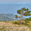 Pine tree against black sea — Stock Photo