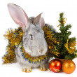 Rabbit and christmas decorations — Stock Photo