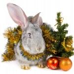 konijn en Kerstmis decoratie — Stockfoto