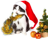 Kitten as Santa Claus and christmas tree — Stock Photo