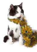 Cat with garland — Stock Photo