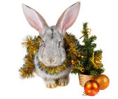 Gray rabbit and christmas decorations — Stock Photo